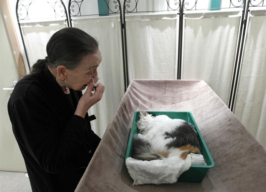 Усыпление кошек на дому в Москве - гуманно и без боли усыпить кошку